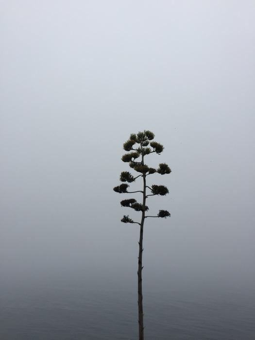Foggy Highway 1, Big Sur