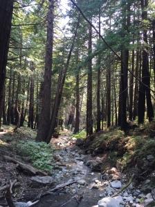Creek in Limekiln State Park