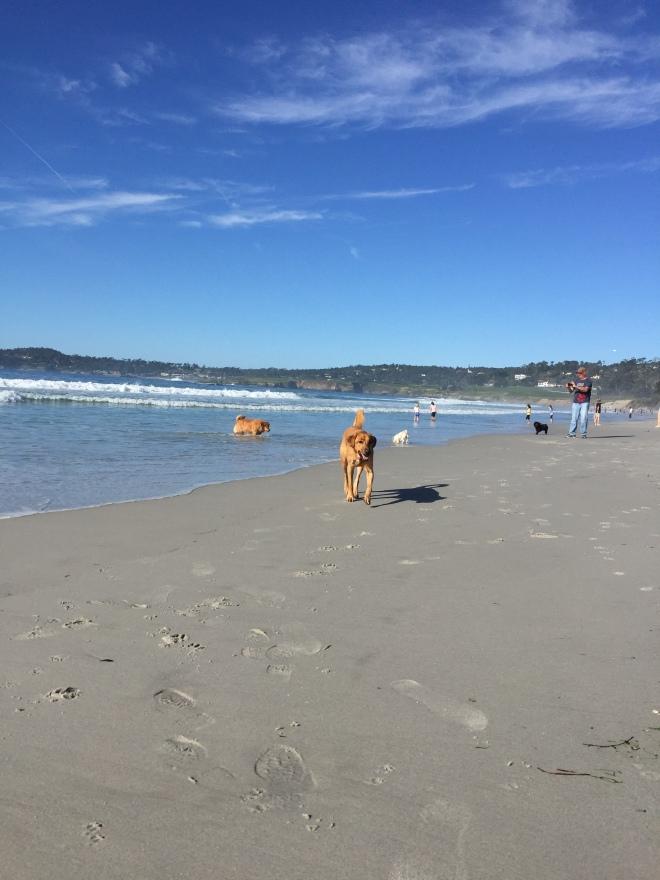 Dog Friendly Beach Bodega Bay Off Leash