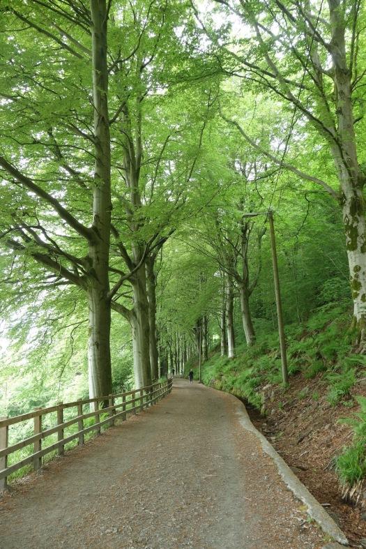 Mount Fløyen Trail